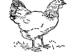 black hen nursery rhyme illustration of a chicken