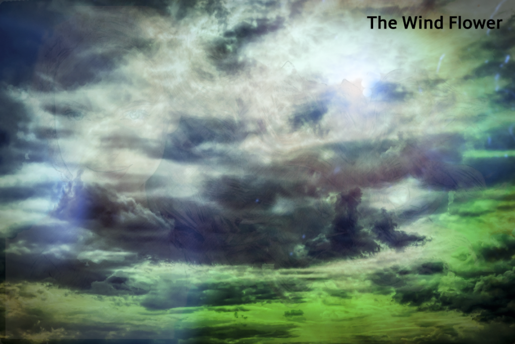 The Wind Flower book of fiction mystery and romance